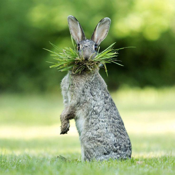 Интересные фото животных последней недели