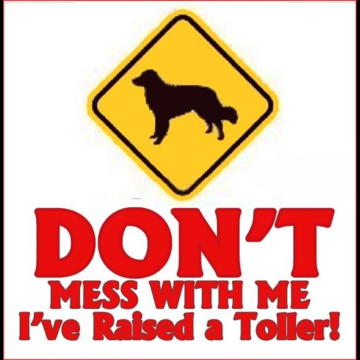 Don't mess with me. I've raised a Toller.
