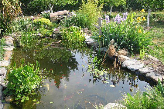 Jardin d 39 eau ou mare hors sol ou dans la continuit de for Eclairage bassin