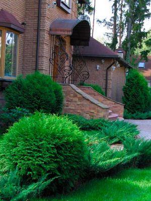 Хвойные в дизайне сада: фото и особенности ухода за хвойными растениями, подготовка к зиме
