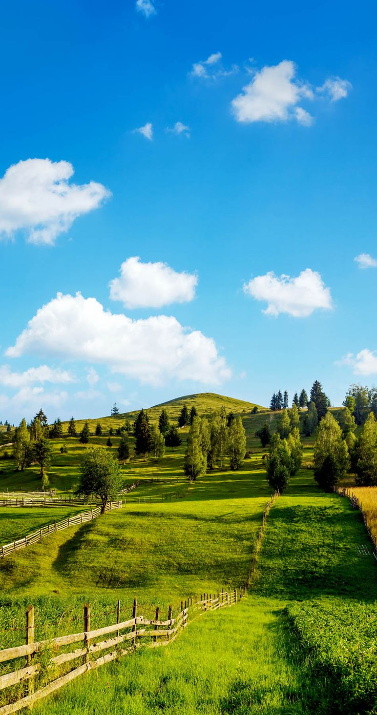 Scenic Rural View in Summer with scattered trees and wooden fence in Ghimes…