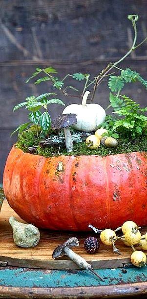 Pumpkin Planter - This idea's a keeper! ❊