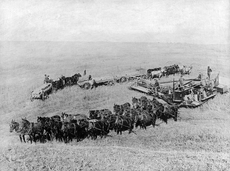 "Washington Grown – ""Heritage of Wheat"""