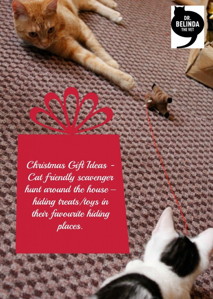 Are you wondering what to get your cat for Christmas? Look no further than Dr Belinda's 12 Christmas Gift Ideas for your cat