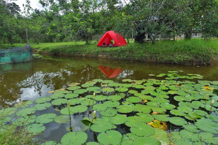 Mudik di Kebun Konda, Kendari, Sulawesi Tenggara, Indonesia