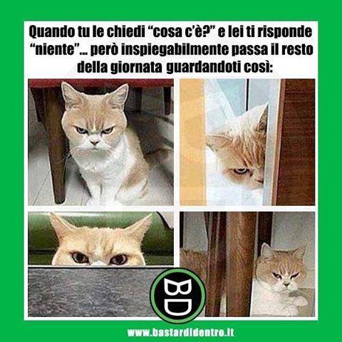 """Quel """"niente"""" che significa tutto! #gatto #gatti #coppie #relazioni #bastardidentro www.bastardidentro.it"""
