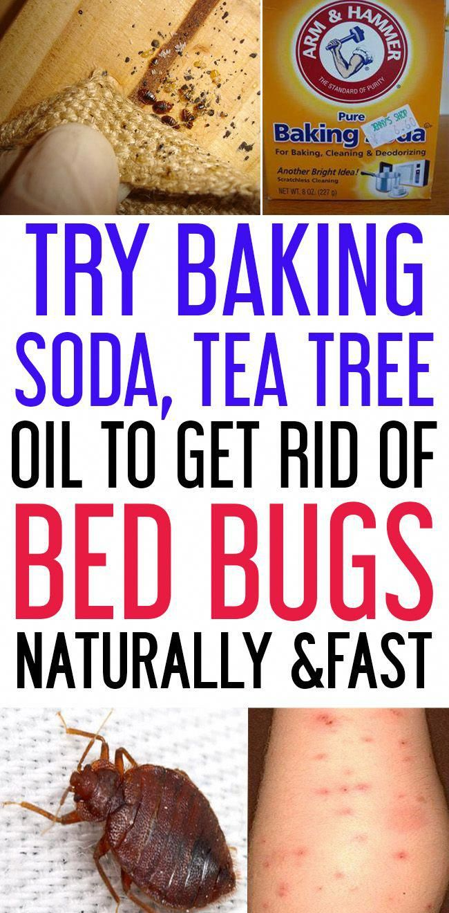 How to get rid of bed bugs using these natural ingredients