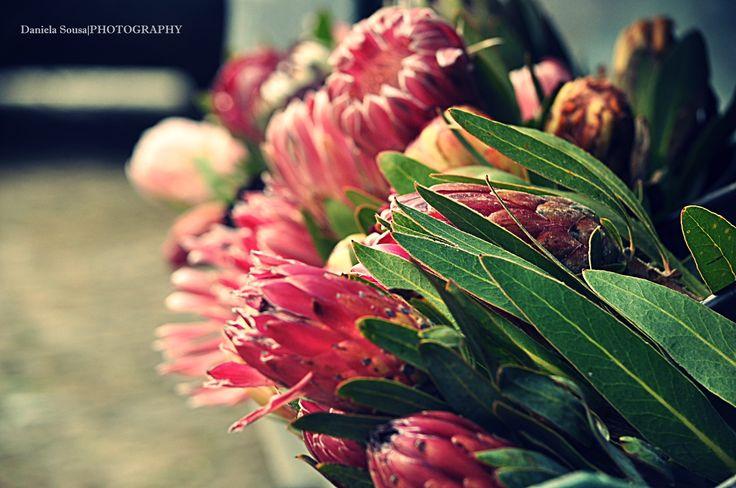 Prótea, a flor de África do Sul