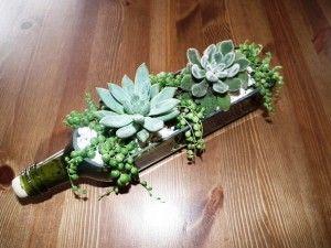 succulent bottle Kövirózsa Dekor