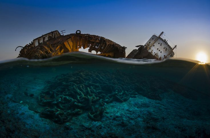 The organizers of the Underwater Photographer of the Year have just announced their winning photos for 2017.