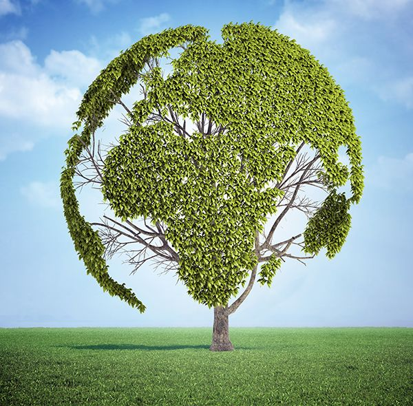 Sustainable banking supports The Vegan Society   The Vegan Society