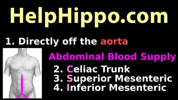 Abdominal aorta: Dirty mnemonic for abdomen arteries and blood supply: c...