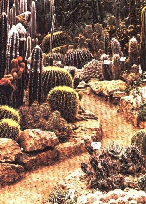 10 best images about Southwest Plants on Pinterest