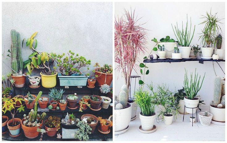 plantes d 39 int rieur d corez avec des plantes vertes d and interieur. Black Bedroom Furniture Sets. Home Design Ideas
