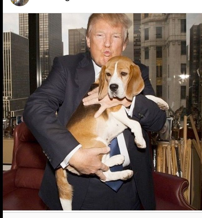 Animals are creations of Gods and should not be forced to endure this kind of treatment. Clearly, this animal was drugged before being assaulted by what is obviously a freaky orange pervert with a room temperature IQ.