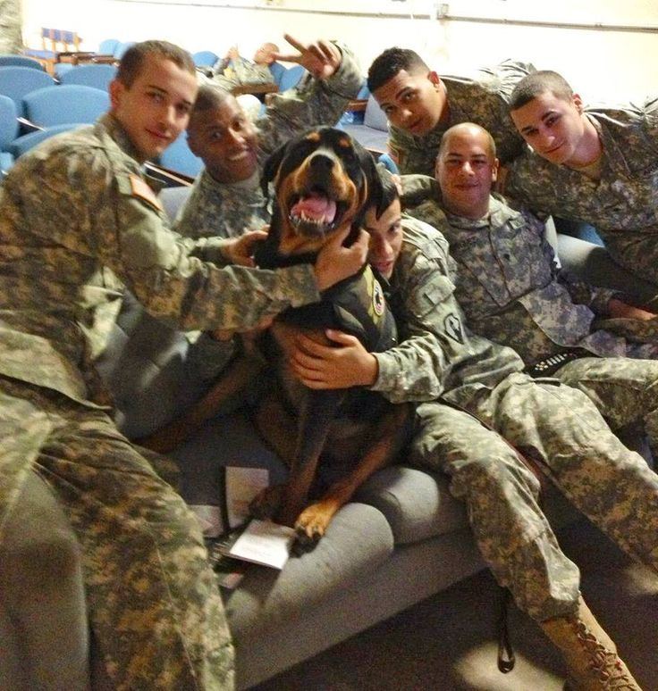 This lovable fellow is Sarge, the PTSD service dog of Chris Garvey, who works as a combat lifesaver instructor at Joint Base McGuire-Dix-Lakehurst in NJ. In this photo, Sarge is happily receiving loving hugs from some Army troops before they deploy. He is a real hit around the base.