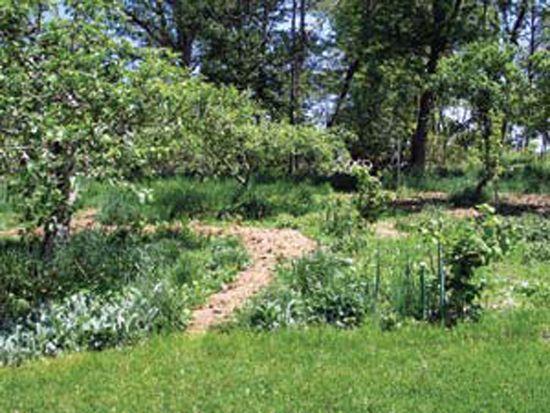 Plant an Edible Forest Garden – Organic Gardening