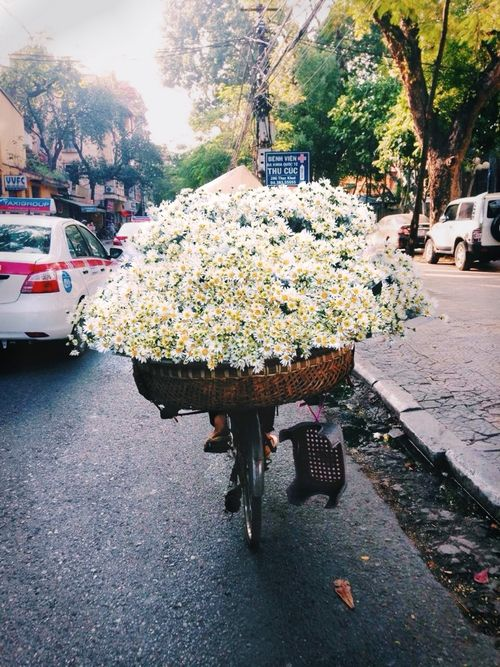 { I want to ride around the city with flowers and give them to people! }