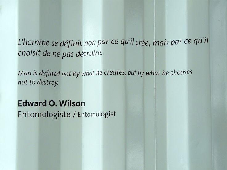 Création vs Destruction - De Edward O. Wilson - par Les Contes Succulents