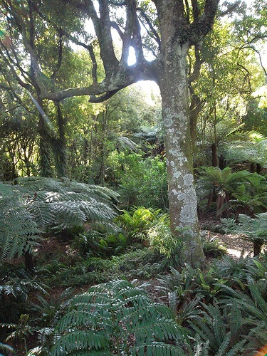 A botanical garden in Wellington, NZ