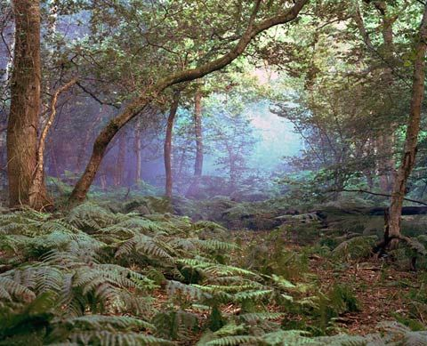 Mystical Landscapes Photographed at Paintball SitesForests, Mayer 摄影作品, Mystic Side, Peter O'Tool, Sur Katja, Gorgeous Photography, Mystic Landscapes, Katja Mayer, Mayer Photography6