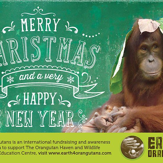Earth 4 Orangutans Christmas Card! Check it out under rawildlife on red bubble now! Order for a small contribution towards a big impact!
