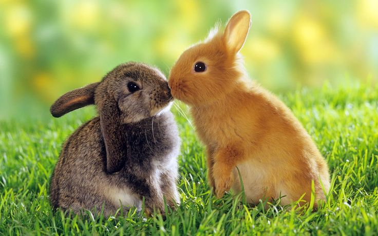 cute animals pictures - Google Search
