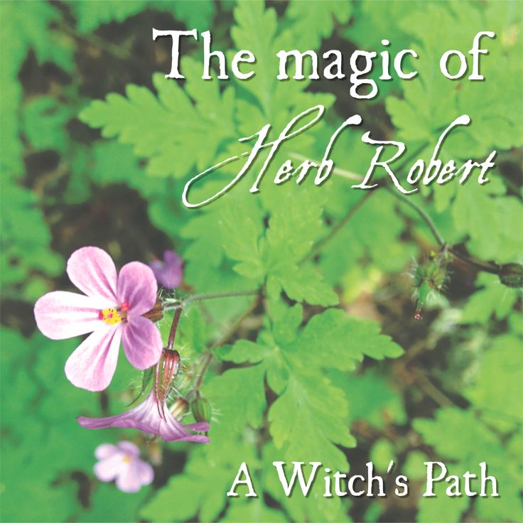 the power of herbs essay Masters thesis the history and basics of metaphysics by rev vickie l carey aka in this essay we will briefly look into the past at the history of the the healing power of herbal teas by ceres esplan (1984) is a guide to growing.