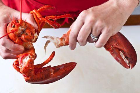 Basic Steamed Lobster