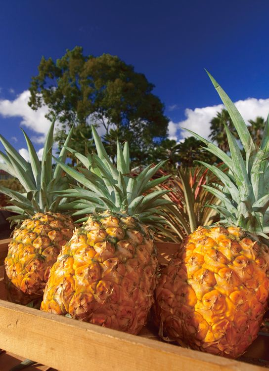 Pineapples remind me of my family's heritage. My grandfather worked on a pineapple plantation in Hawaii. Pineapples are also a symbol of hospitality, a career path I choose.