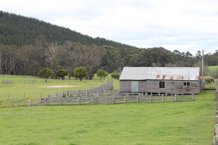 rural coastal - classic australian view - pasture, bush, fencing, wooden shed