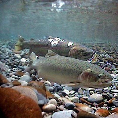 Steelhead Fishing Tips