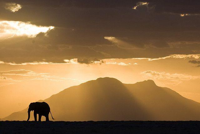 Kenya #kenya: Favorite Places, Alumni Travel, Kenya Tomorrow, Animal Silhouette, Elephant, Kenya Kenya, Photo, Travel Destinations, East Africa