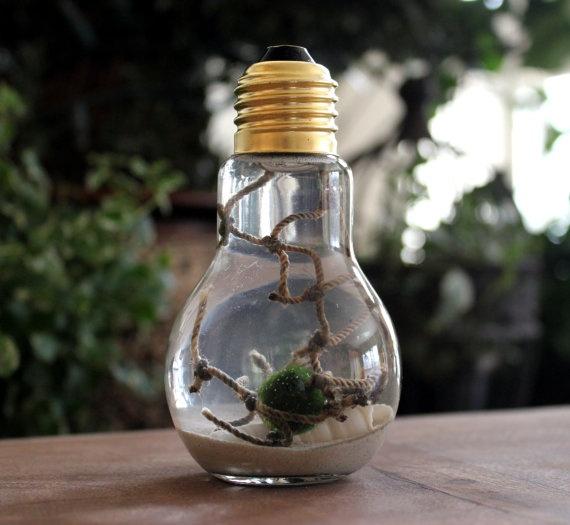 Marimo pet moss ball lightbulb aquarium with sand desktop