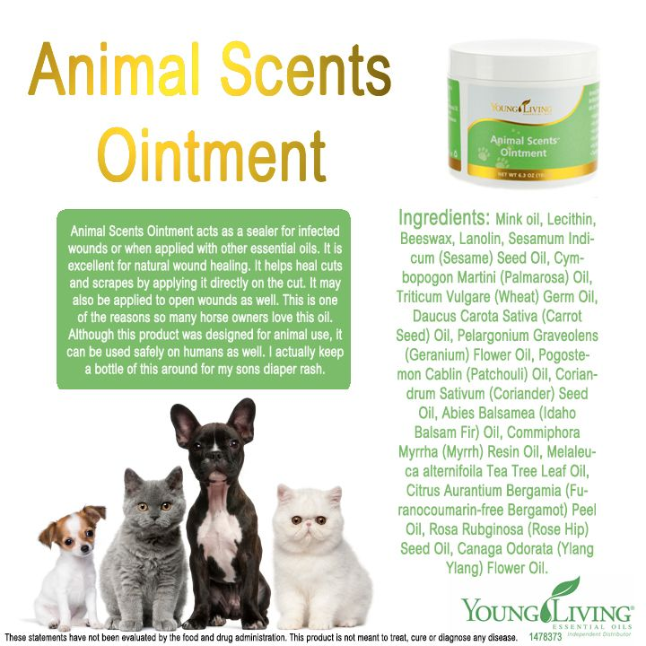 Young Living Essential Oil Animal Scents ointment Dogs Pets Animals Horses Healing Wounds Naturally Salve www.facebook.com/YLnatural