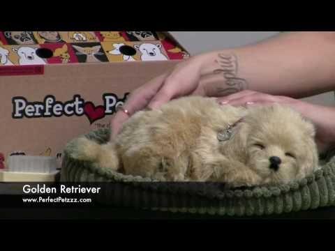 Perfect Petzzz : Golden Retriever - Video