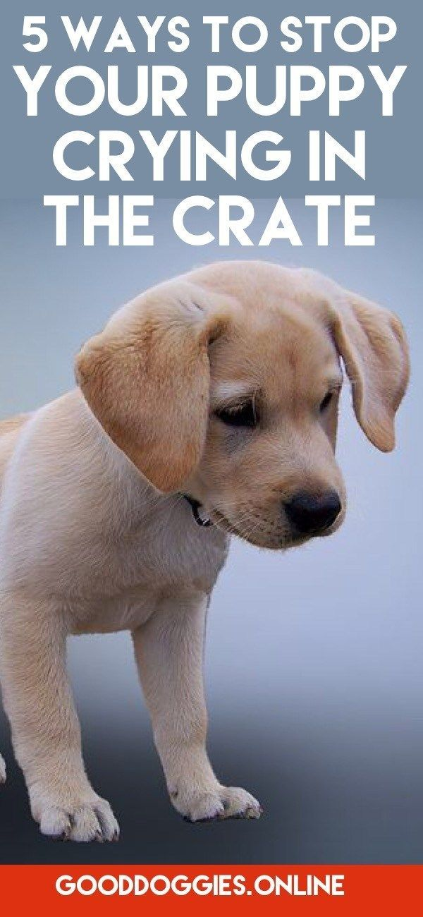 5 Ways To Stop Your Puppy From Crying In Crate Training Your Puppy Puppy Training Tips Crate Training