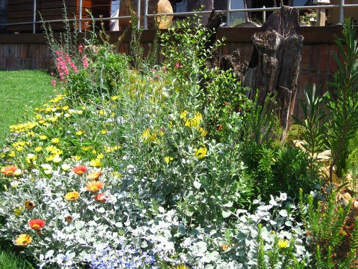Wonderful flowering perennials and contrasting ground covers, in the front of the Fynbos Garden