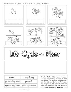 Click on Images to download a larger image. Right Click and Save to your Computer. Terms of Use Free Plant Life CycleClipart, Worksheets, Charts and Notebooking Page.