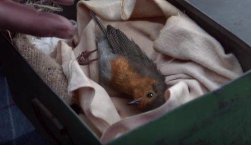 Waitrose's Christmas Ad Follows a Little Robin's Long Journey Home  - CountryLiving.com