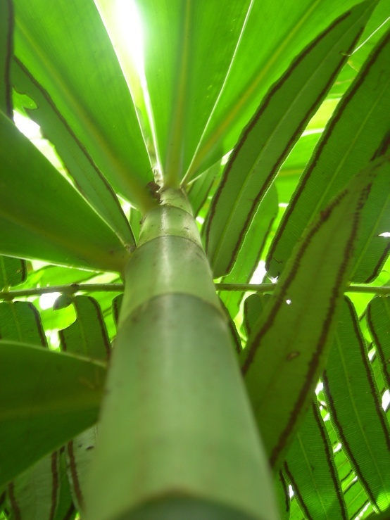 17 Best Images About Bamboo On Pinterest Wedding