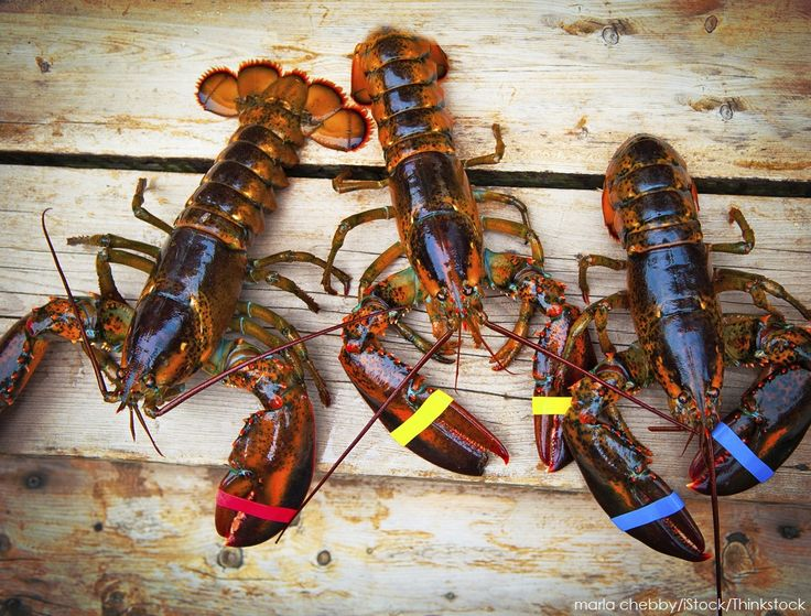Where to Go to Enjoy Maine Lobster Season | Dockside Guest Quarters | York, Maine