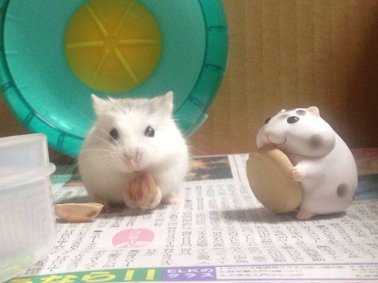 Mejores 41 imágenes de Animal en Pinterest | Animales bebé, Animales ...