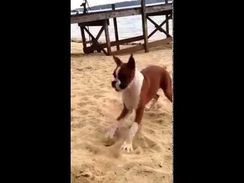 Dog Eats Lemon and goes CRAZY - YouTube