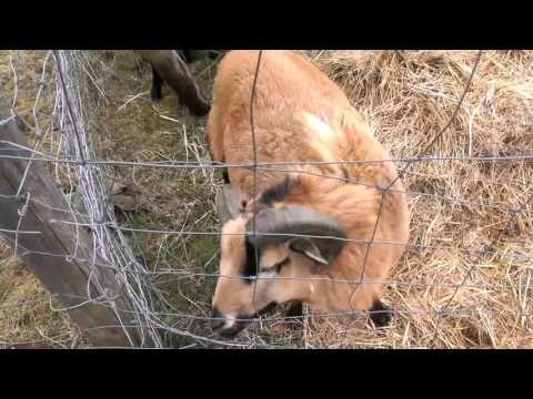 Niemieckie zwierzęta domowe..Agroturystyka..Kolonia.-Deutsch Haustiere ....