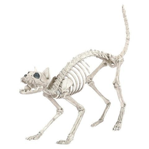 Skulleta is rain's pet cat skeleton. She found skulleta at the cemetery and took her in.skulleta is like any normal cat,she likes naps,hunting sewer rats that get inside,playing with yarn of life balls,and climbing trees.she is also very independent like any other cat.