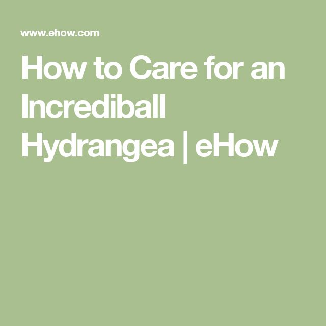 How to Care for an Incrediball Hydrangea | eHow