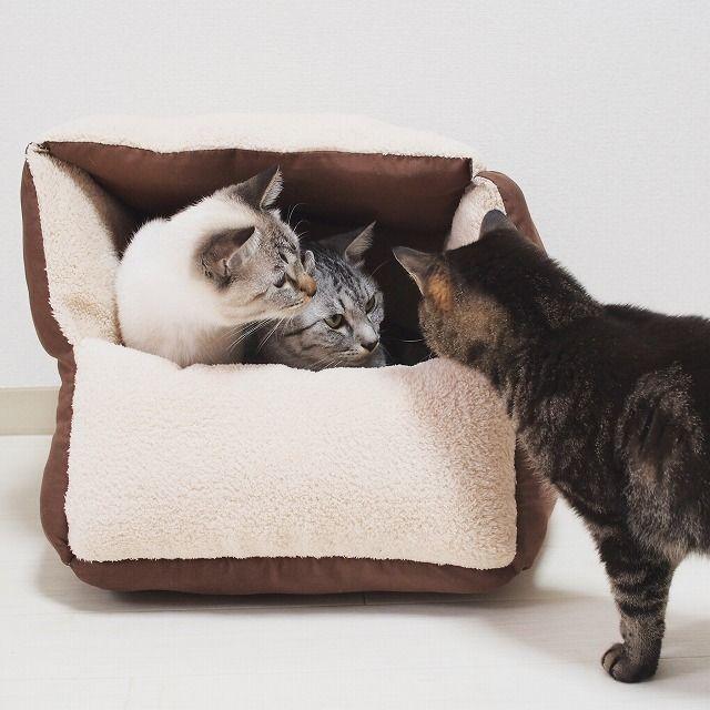 ダイソーの座布団で猫ベッドを作ってみた 今日も猫と 猫 ベッド 手作り 猫 こたつ 猫 ベッド 冬