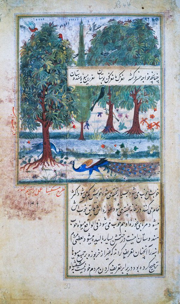Miskin and Ibrahim Kahar. Mango Trees and Peafowls. Baburnama, Agra, ca. 1590, Chester Beatty Library, Dublin