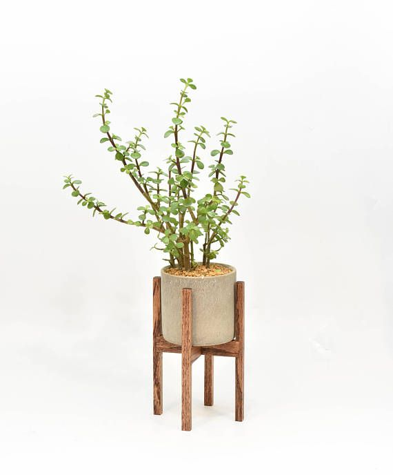 Small Mid Century Modern Plant Stand with Cement Pot Indoor